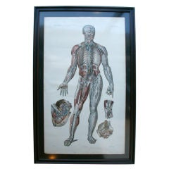 Framed 19th Century French  Anatomical Prints