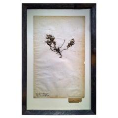 Framed Botanical Study # 7
