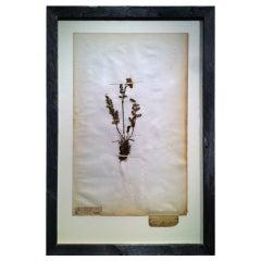 Framed Botanical Study # 3
