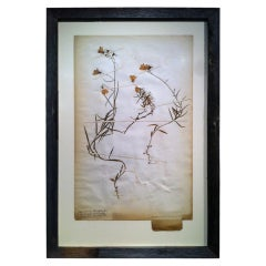 Framed Botanical Study # 2