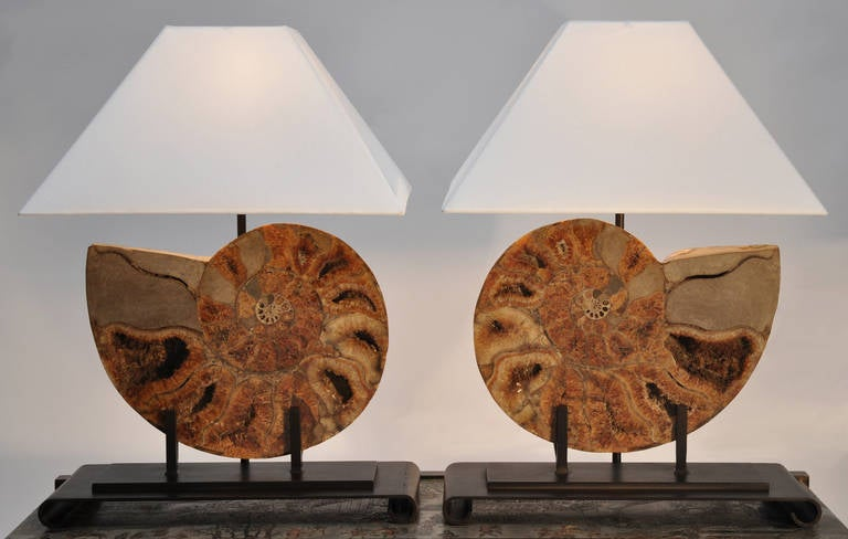 Pair of fossil (ammonite) lamps with iron base and frames. New custom shades.. Tops have diffusers.