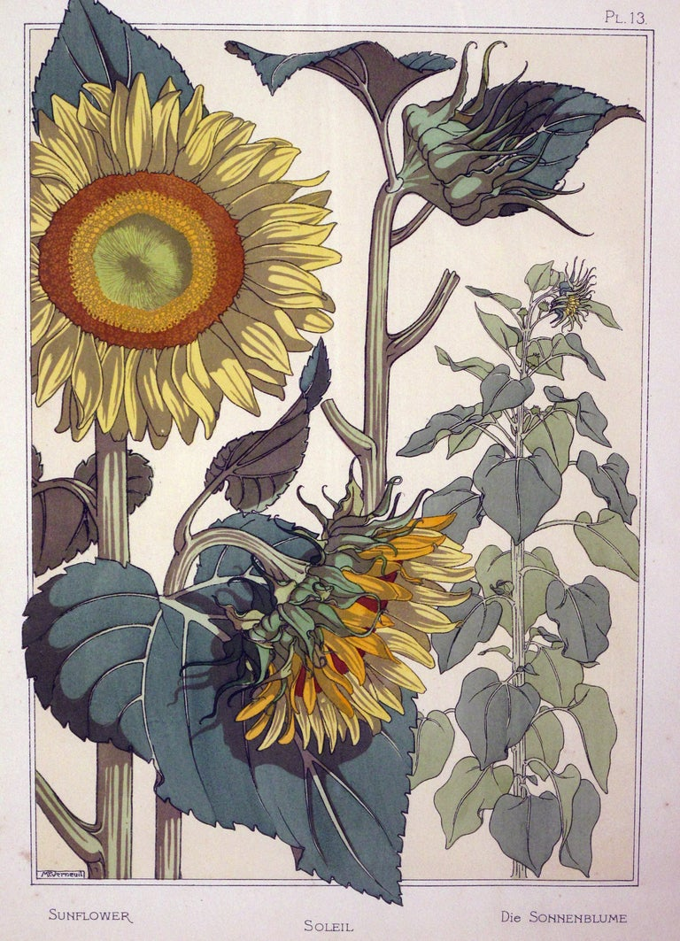 Set of Three French Art Nouveau Chromolithographs of Nasturtiums & Sunflowers 4