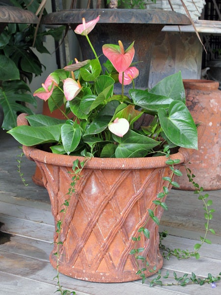 20th Century A Large-Scaled English Terracotta Basket Weave Garden Urn For Sale