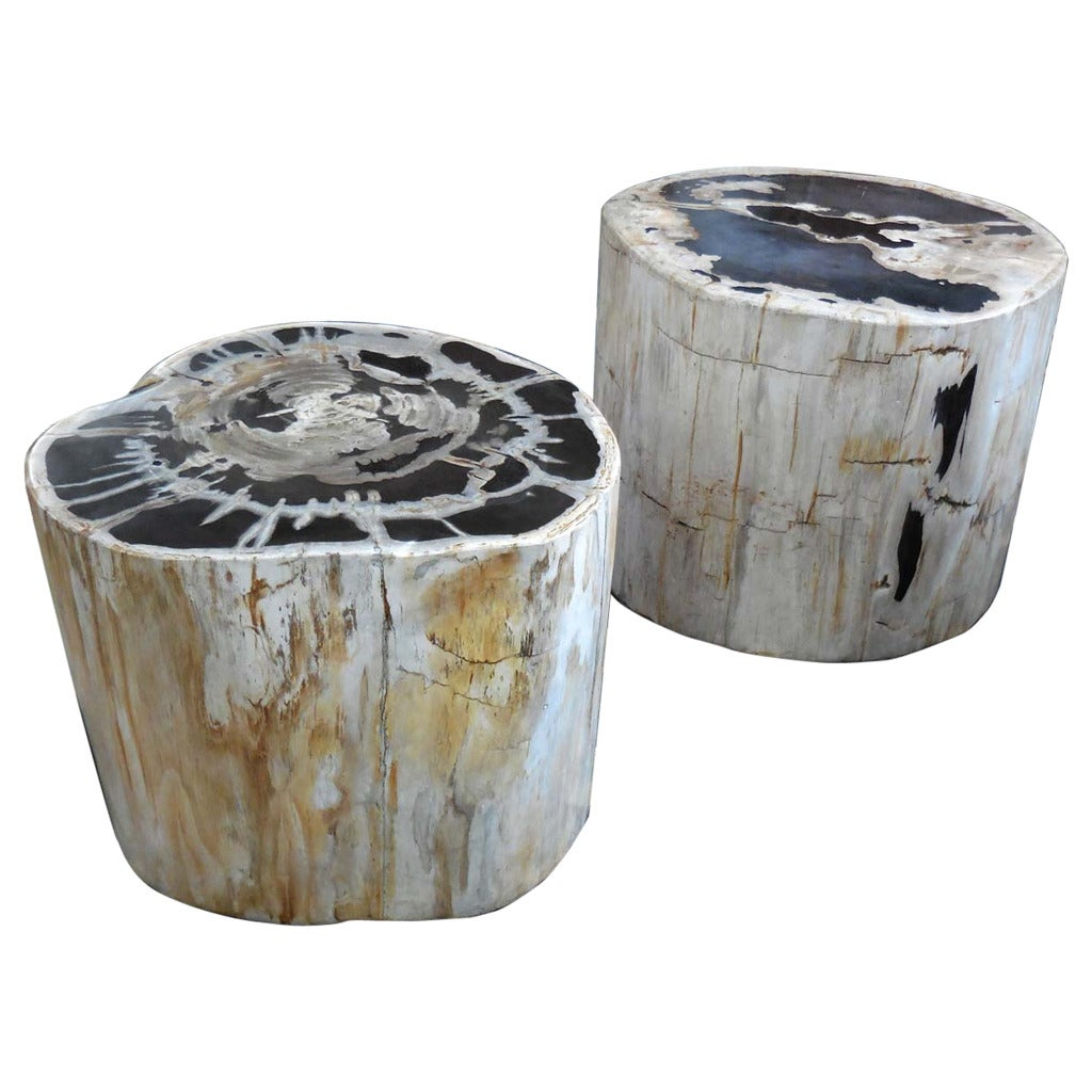 Large scale petrified wood side tables at stdibs
