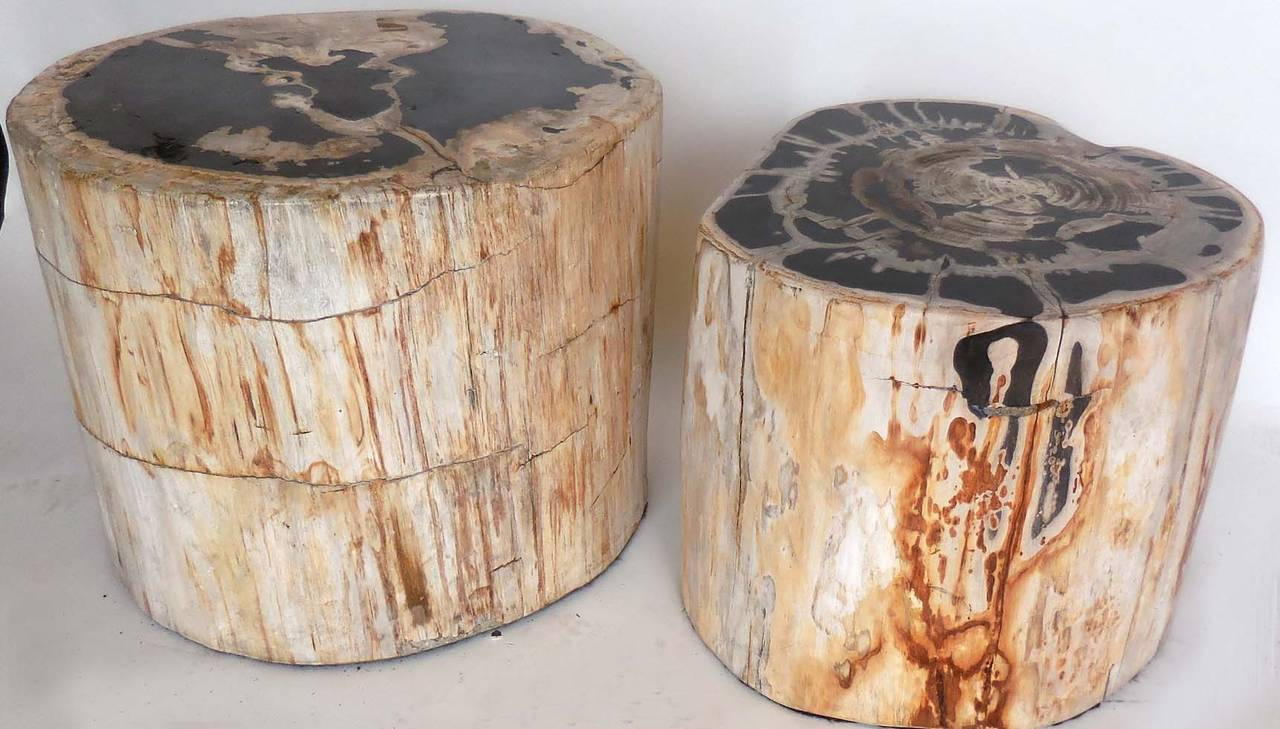 Large Scale Petrified Wood Side Tables At 1stdibs
