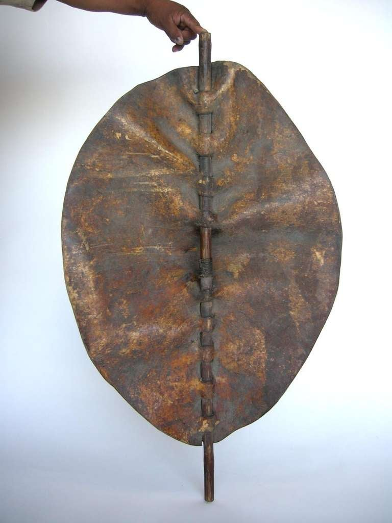 Beautiful, sculptural Rhinoceros hide and wood shield. Striking form. Early 1900. All sides are beautiful.