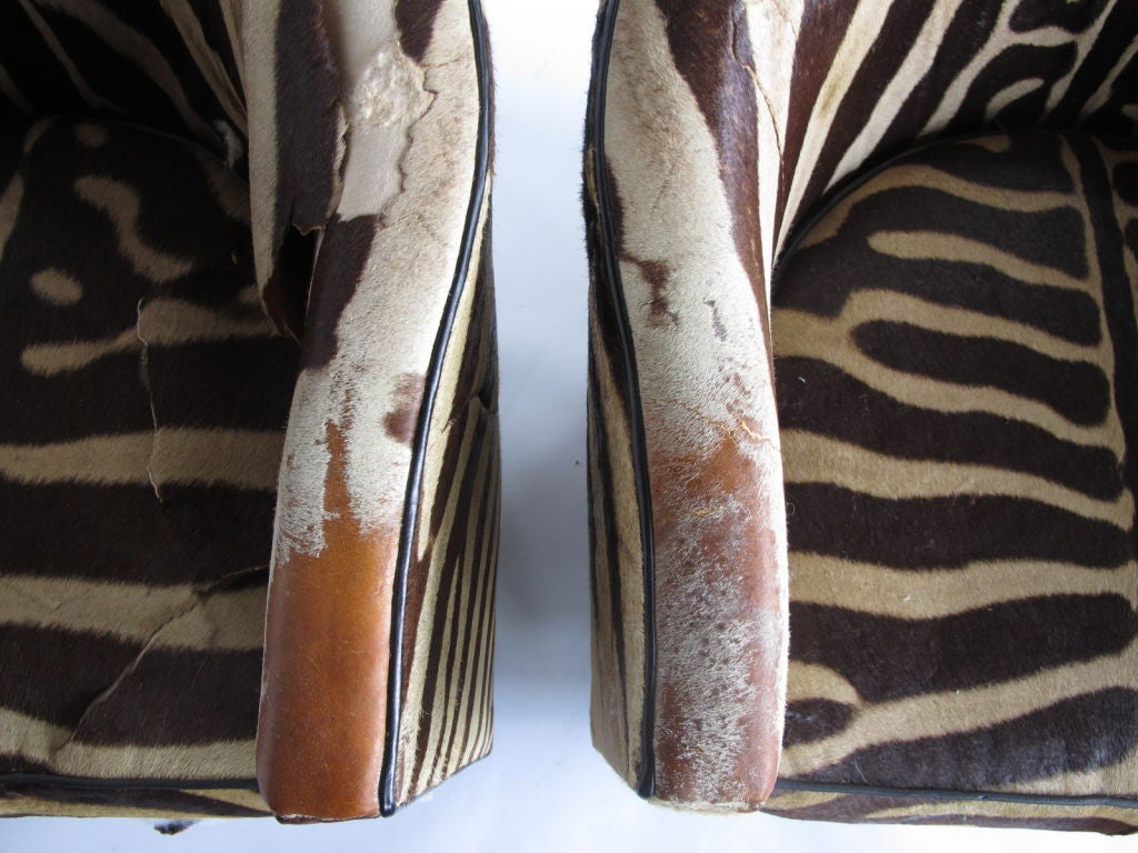 A Pair of Wormley for Dunbar Barrel Chairs in Original Zebra image 3