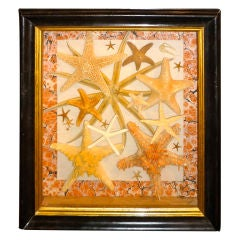 Vintage Framed Starfish Collection