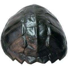 Black Lacquered Tortoise Shell