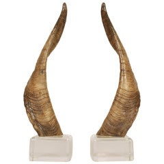 Pair of African Horns on Lucite Bases after Karl Springer