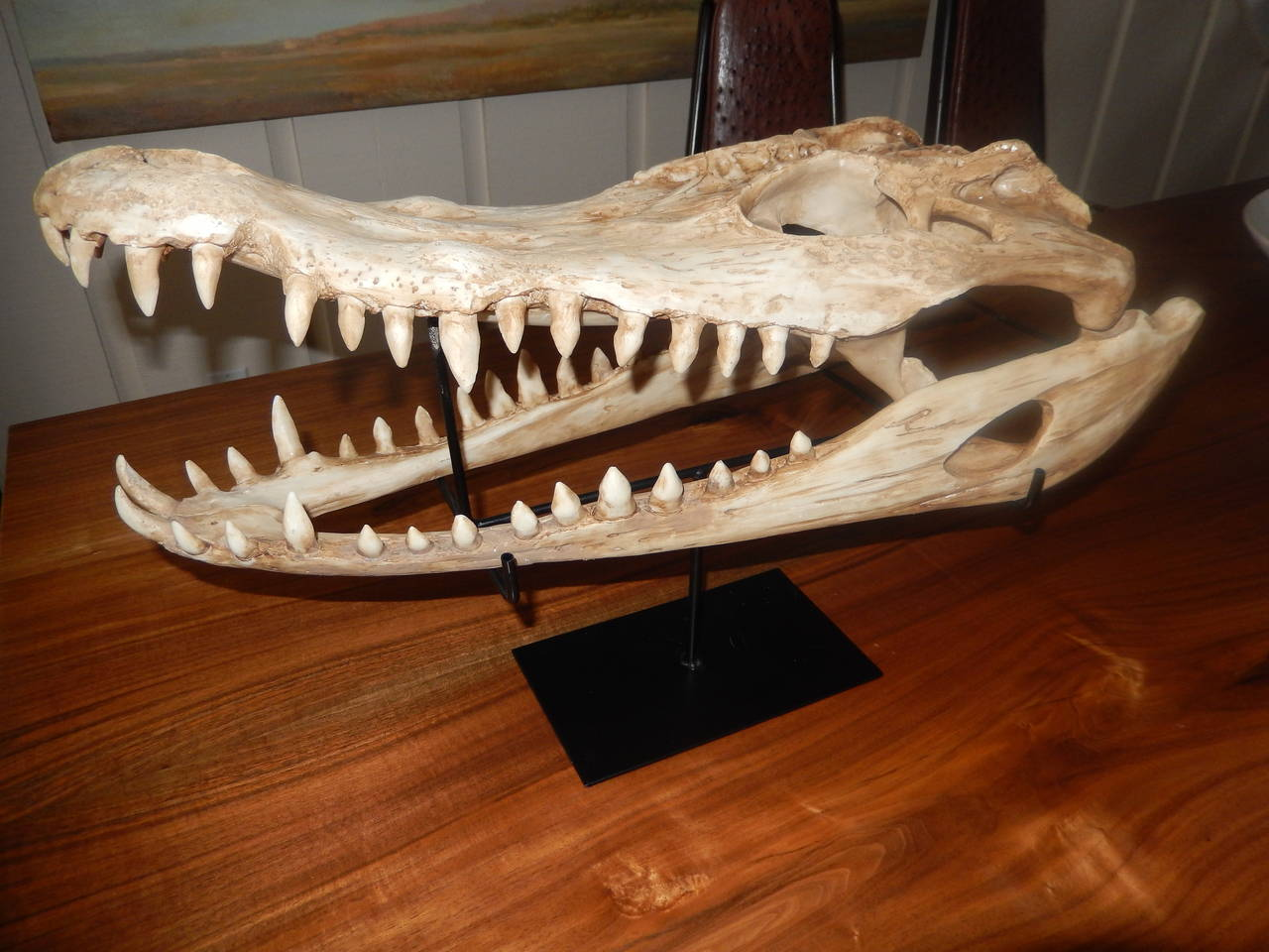Mid-20th Century Large Vintage Cast Aligator Skull For Sale