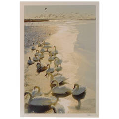 """The Swans of Squassex,"" by Photographer Patrice Casanova, Long Island, NY"