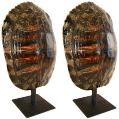 Pair of Natural Turtle Shell Lamps on Stands