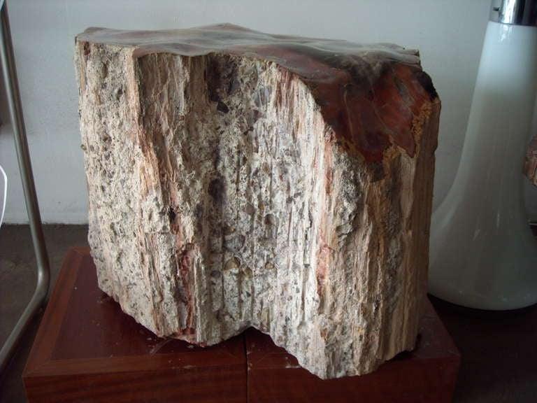 Large Polished Arizonicum Petrified Wood Table Stool Stump