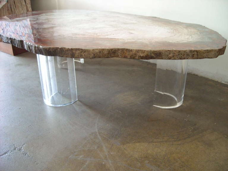 Monumental Fossil Slice Specimen Petrified Wood Coffee Cocktail Table At 1stdibs