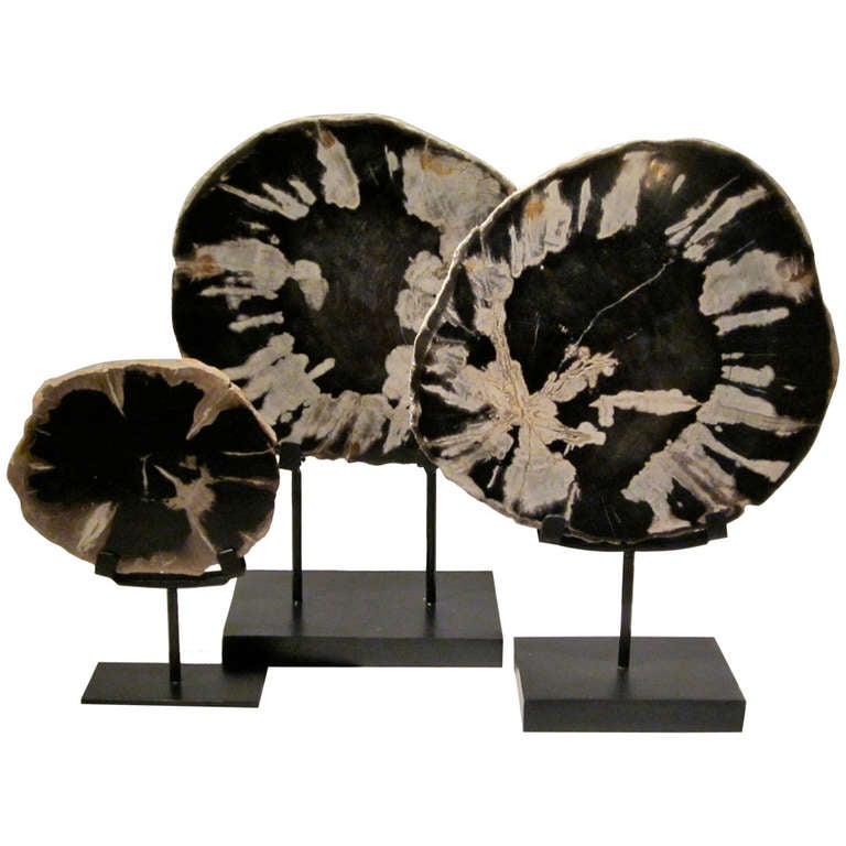 Set Of Three Indonesian Petrified Wood Slices on Stands at  : 937942l from www.1stdibs.com size 768 x 768 jpeg 53kB