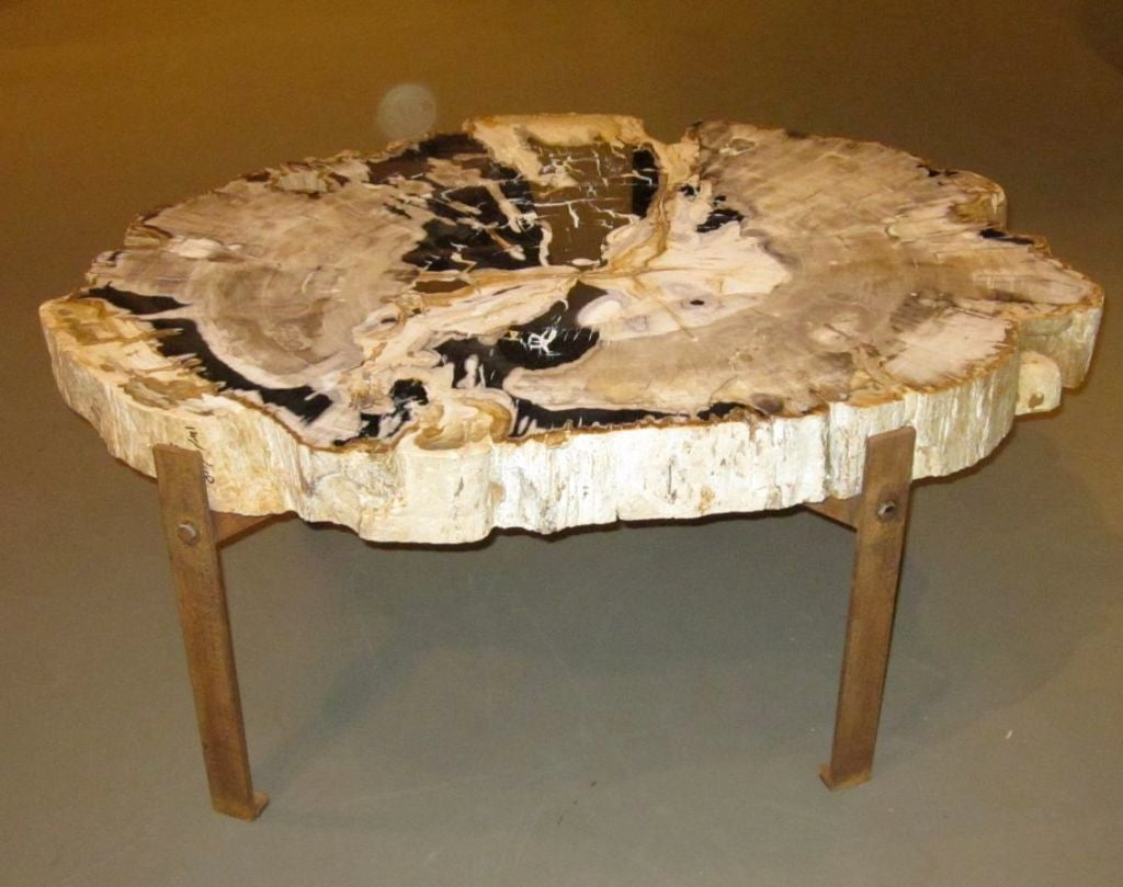 Beautiful Petrified Wood Coffee Table 1