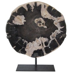 Thick Petrified Wood Slice Black and Cream Sculpture, Indonesia