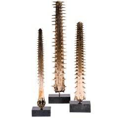 Sawfish - Organic Collection