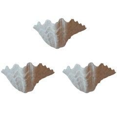 Set of three 70's plaster shell sconces