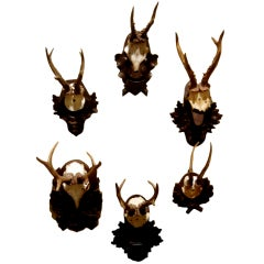 Collection of Five Black Forest Roe Mounts on Carved Wood Plaques
