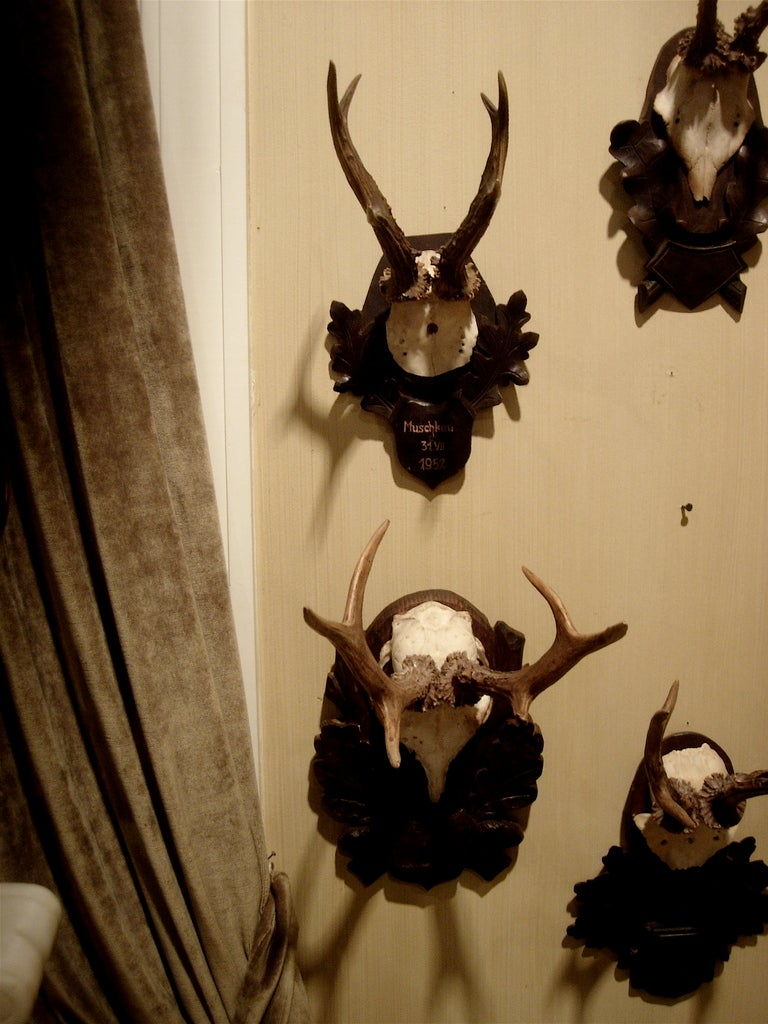 Collection of five Black Forest roe mounts on carved wood plaques.