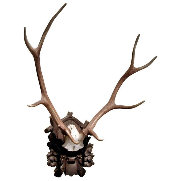 Black Forest Stag Mount on Carved Wood Plaque
