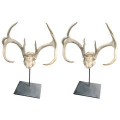 One Pair of Sculptural Antler Mounts on Custom Iron Stand