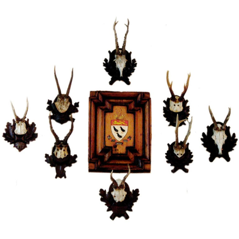 Collection Of Twenty Black Forest Roe Mounts