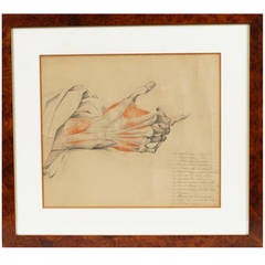 Dissection of the hand, early 1800