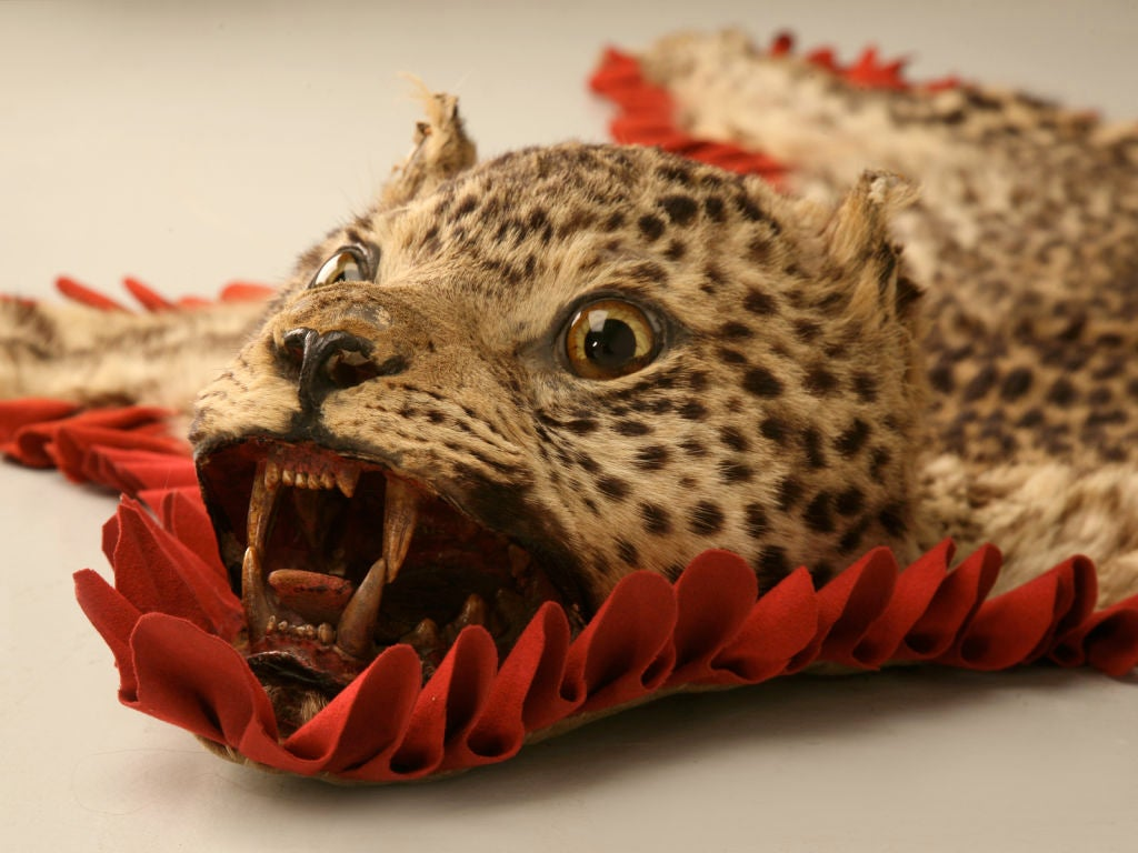 Vintage Authentic Leopard Skin Rug At 1stdibs