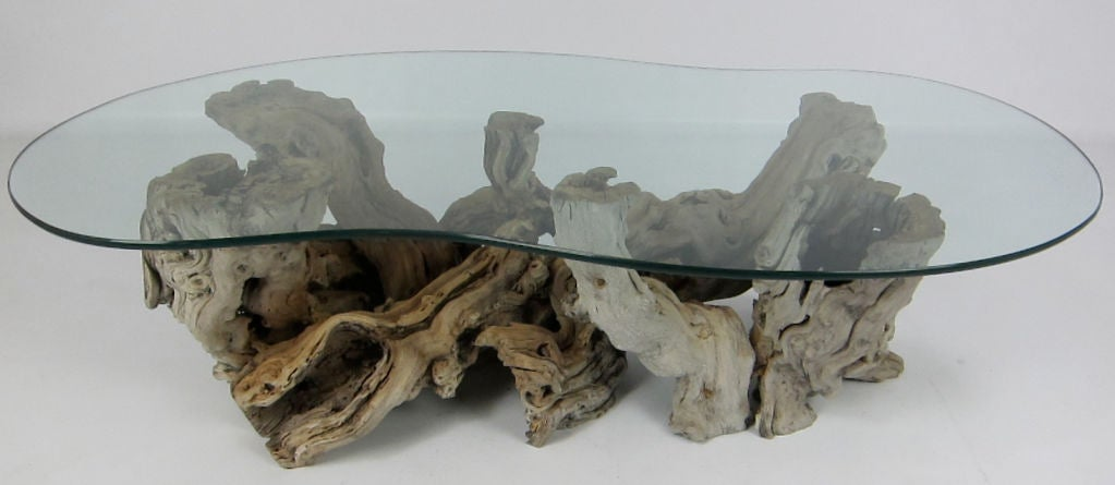 Large Root Burl Coffee Table With Freeform Glass Top At