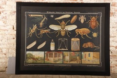 Vintage Winslow Health Hygiene Series Medical Scientific Insect Wall Chart Print