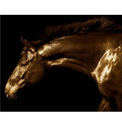 """""""Winsor,"""" Color 55"""" Framed Signed Photograph Of Horse By Lisa Houlgrave"""