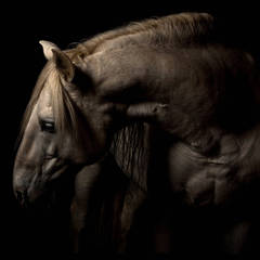 """Patience"" Framed Color Horse Photo by Lisa Houlgrave"