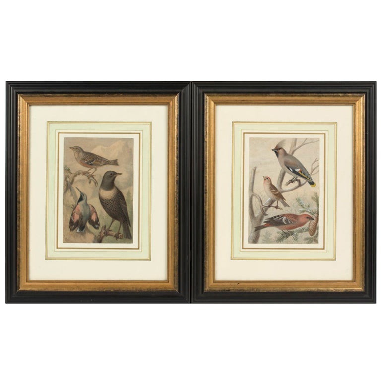 19th c. Pair of Watercolors, American School