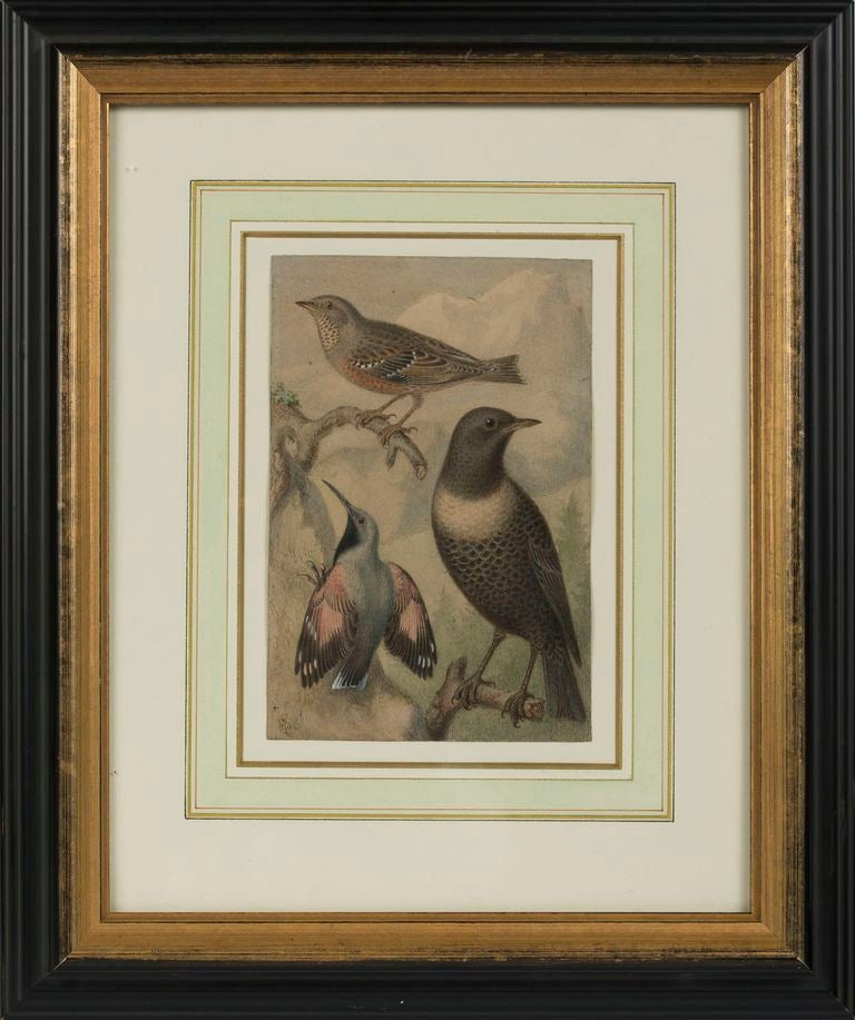 Western Wild Birds, each monogrammed ES lower left. Watercolor on Paper.
