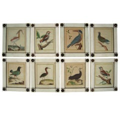 Set of Eight Framed  18th Century French Bird Prints by Martinet