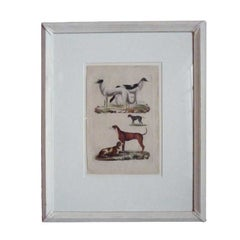 Early 19th Century French Dog Prints