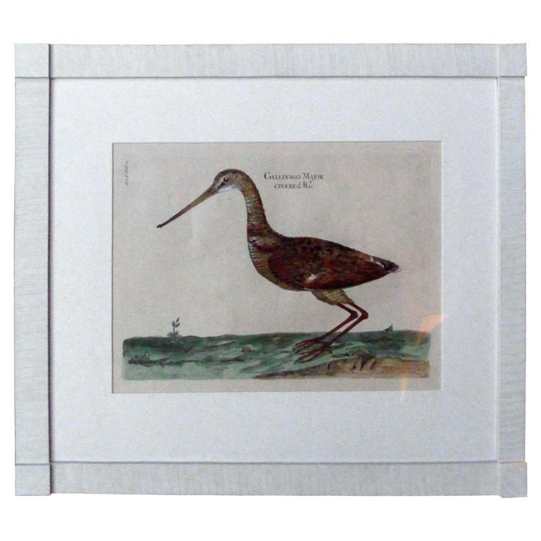 19th Century Hand-Colored Bird Engraving