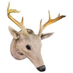 American Carved and Painted Wood Deer Head Trophy