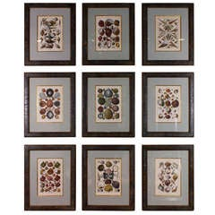 Set of Ten Rare French Hand-Colored Engravings of Shells