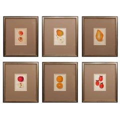 Set of Fruit Prints
