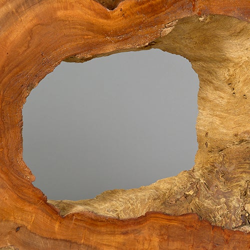 Contemporary Naturally Formed Acacia Sculpture by Alex Cayet For Sale