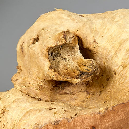 Wood Naturally Formed Acacia Sculpture by Alex Cayet For Sale