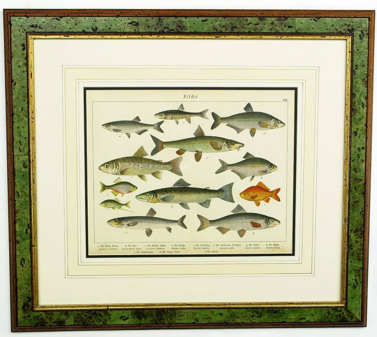 Colorful Trio 1880 Schubert German Lithographs of Aquatic Life In Good Condition For Sale In Chicago, IL