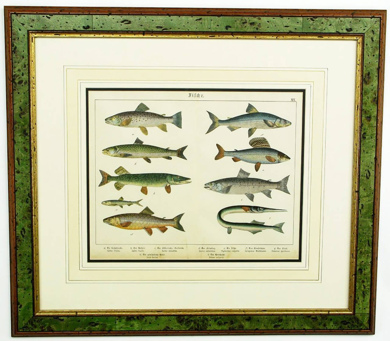 Late 19th Century Colorful Trio 1880 Schubert German Lithographs of Aquatic Life For Sale