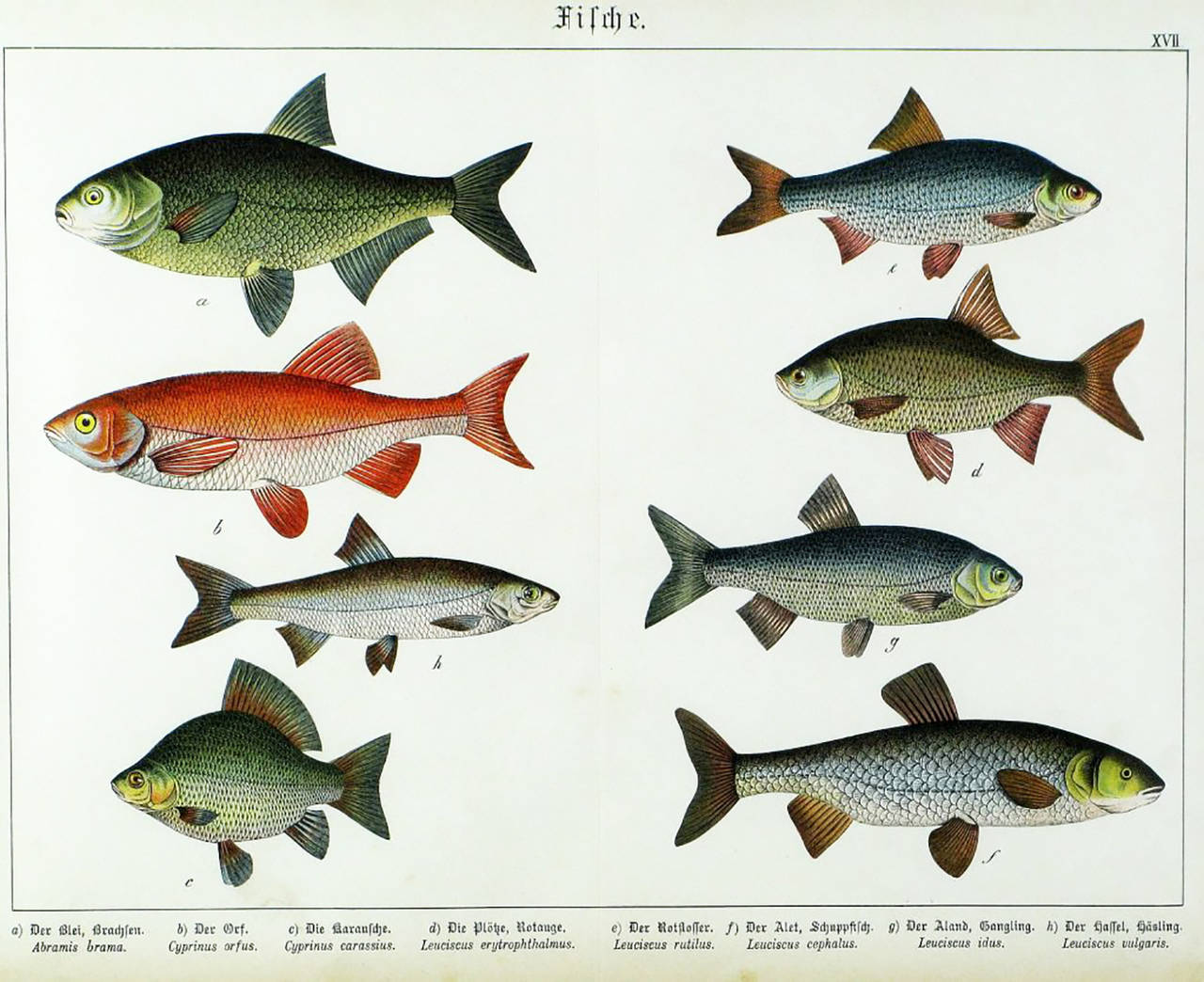 Glass Colorful Trio 1880 Schubert German Lithographs of Aquatic Life For Sale