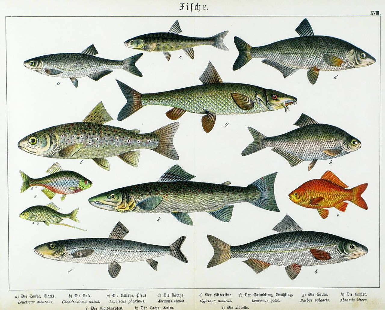 Colorful Trio 1880 Schubert German Lithographs of Aquatic Life For Sale 1