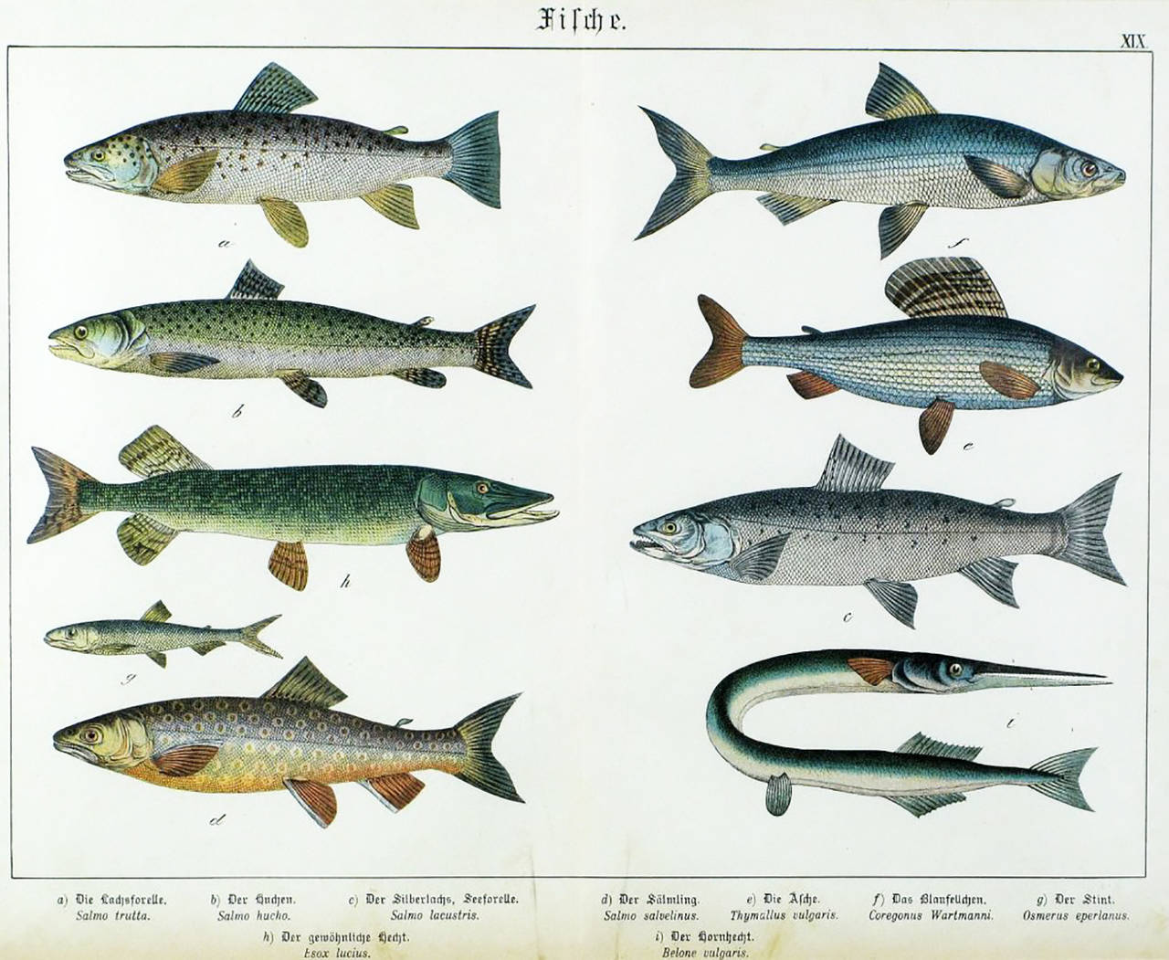 Colorful Trio 1880 Schubert German Lithographs of Aquatic Life For Sale 2